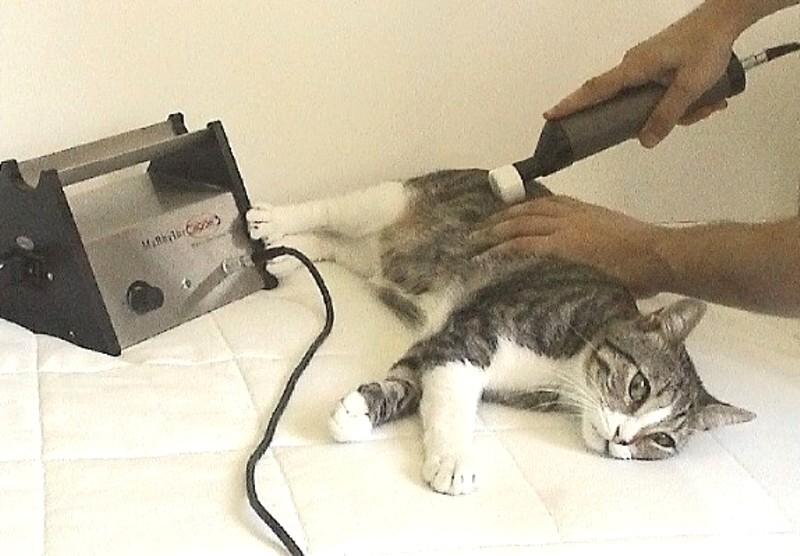 Matrix Therapie Katze
